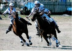 become an A Grade polocrosse player.