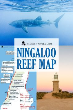 Get a detailed map of the areas surrounding the Ningaloo Reef for your next Western Australia snorkelling, whale watching, and marine wildlife adventure. A detailed itinerary and travel guide are also available for your road trip. Australia Tours, Western Australia, Australia Travel, Australia Honeymoon, Queensland Australia, Travel Maps, Travel Destinations, Australia Destinations, Great Barrier Reef Australia