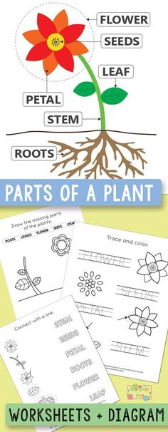 Parts of a Plant Worksheets Kindergarten and Grade primaire Free Printable Parts of a Plant Worksheets - Itsy Bitsy Fun Kindergarten Units, Free Kindergarten Worksheets, 1st Grade Worksheets, Science Worksheets, Worksheets For Kids, Homeschool Worksheets, Homeschooling, Science Tools, Reading Worksheets