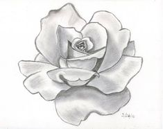 pencil drawings | This is my first attempt at doing a shaded pencil drawing of a rose i ...