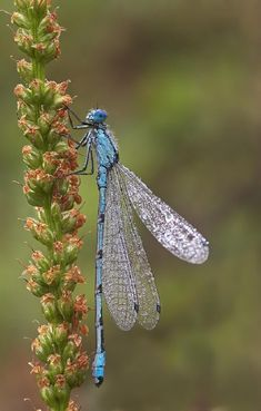 Ideas tattoo dragon fly dragonflies wings Best Picture For Insects head For Your Taste You are looking for Dragonfly Insect, Dragonfly Wings, Blue Dragonfly, Dragonfly Tattoo, Dragonfly Images, Flyer Inspiration, Fly Drawing, Flying Tattoo, Flying Flowers