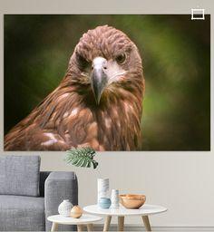 Roofvogel van Rob Frank