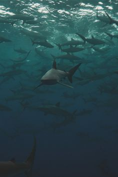 Types of Sharks – Most people think of a shark as a big violent predator with very sharp teeth ranging the sea in search of food. But in fact, there are over 400 different species of sharks. Types Of Sharks, Species Of Sharks, Under The Water, Under The Sea, Underwater Creatures, Ocean Creatures, Orcas, Beautiful Creatures, Animals Beautiful