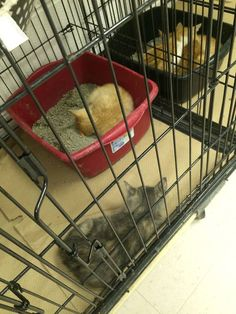 Kittens, Cats, Plastic Laundry Basket, Shelters, Type 3, North Carolina, Home Appliances, Facebook, Photos