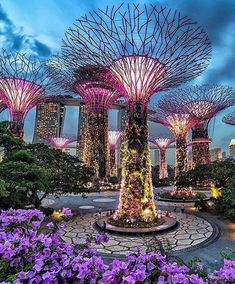 Super Tree Groove - Singapore Picture by . for a feature - via Wonderful Places on : Amazing Destinations - International Tips - Dream - Exotic Tropical Tourist Spots - Adventure Travel Ideas - Luxury and Beautiful Resorts Pictures by Singapore Garden, Singapore City, Singapore Photos, Singapore Travel, Travel Abroad, Asia Travel, Beautiful Places To Visit, Wonderful Places, Gardens By The Bay