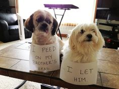 Pet Shaming Partners In Crime 34 Pics Funny Animal Pictures, Dog Pictures, Funny Animals, Cute Animals, Animal Pics, Crazy Animals, Funny Photos, Crime, Funny Dogs