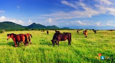 Horses in Posavina