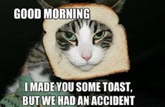 funny good morning memes The best way to outset your day is by reading funny good morning quotes. Here is our collection of cute, sweet, and romantic Funny Good Morning Quotes Good Morning Funny Pictures, Morning Memes, Funny Good Morning Quotes, Good Morning Picture, Morning Qoutes, Funny Memes, Hilarious, Funny Quotes, Humor Quotes