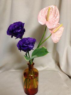 トルコキキョウ アンスリウム Texas Bluebell anthurium