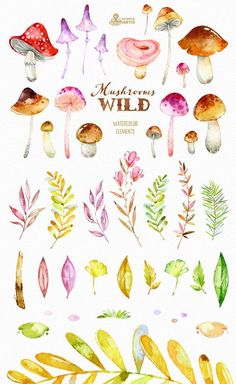 Wild Mushrooms. 41 Watercolor separate elements by OctopusArtis