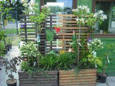 Kompozycje roślin w donicach - stworzone we Floraj z odmian idealnych do uprawy w pojemnikach.