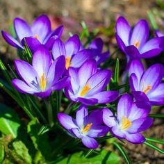 Flowers are happy things. #flowers #blue #instacool #floralbeauty #Lovelyflowers #flowersofinsta #floristagram #florist #floristaustralia #Nature #Inspiring #beautyofflowers #coolflowers #blueflowers #flowerpic