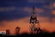 gloaming - Pinned by Mak Khalaf scotland Nature  by ianmcintosh