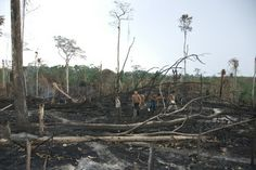 A major development among large palm-oil purchasers, e.g., Kellogg's & Hershey's, 'pledged' (voluntary - no regulation or monitoring) to buy only deforestation-free palm oil for products; 2 of the largest palm oil suppliers, Wilmar & Golden Agri-Resources, made similar commitments. Pressure mounts on remaining hold-outs, Procter & Gamble, Pepsi, & McDonald's to follow suit & do the right thing for the planet [Volunteer self-regulation among corps RARELY if ever works.]