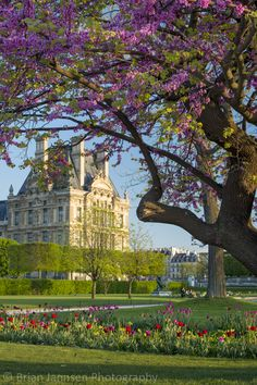 Jardin des Tuileries Two of my favorite times to photograph Paris - spring and fall. Nothing like a perfect spring day to capture Jardin des Tuileries - with Musee du Louvre as your background Tuileries Paris, Jardin Des Tuileries, Paris In Spring, Springtime In Paris, Parcs Paris, Paris France, Places Around The World, Around The Worlds, Parks