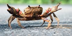 {unidentified} crab - Khao Yai National Park | This photo is… | Flickr - Photo Sharing!