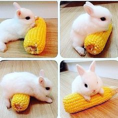 Had a serious session with my #foamroller last night but no one needs to see that! Instead here's a cute bunny rabbit rolling around on some sweet corn as it's way cuter #nothingtodowithyoga #practiceandalliscoming #fascia #deeptissue #myofasciarelease #yoga #practiceandalliscoming #igyoga #yogafam #yogalove #melbourneyoga by my_yoga_diaries You can follow me at @JayneKitsch