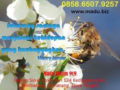 Bukan hanya lambung saja yang akan berterima kasih bila Anda mengonsumsi propolis, namun organ liver juga. Ya, madu hitam 919 ternyata dapat menguatkan liver sehingga dapat bekerja dengan lebih maksimal. Sama seperti hati, ginjal pun akan mendapat keuntungan dan kekuatan baru kalau Anda mengonsumsi madu hitam 9191  secara rutin. Disamping mengonsumsi madu, perbanyaklah minum air putih. Pengiriman dari kota Semarang, Jawa Tengah Cp 0858.6507.9257 Whatsapp Messenger, All Over The World, Messages, Texting, Text Posts