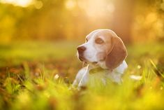 Koirat+rakastavat+omistajiaan+enemmän+kuin+kissat