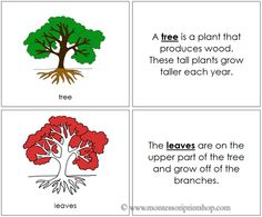 Tree Nomenclature Book (Red) - Describes 5 Parts of the Tree.