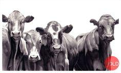 Reid Studios - Art by Vincent Reid - located in Howick Pencil Art, Art Studios, Sheep, Cow, Wildlife, Horses, Black And White, Gallery, Animals