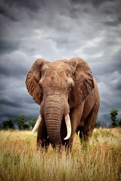 Awww... don't you just love Elephants? Please don't buy ivory...
