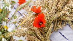 Weizenkranz selber binden Video Anleitung The sun-kissed wheat is best processed outside, because ot Flower Pot Crafts, Flower Pots, Flowers, Flowering Shade Plants, Self Watering Pots, Home Garden Design, Flower Lights, Plant Species, Leaf Shapes