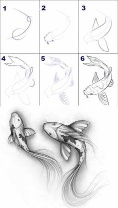 Ideas for home - Tiere zeichnen - Zeichnungen Fish Drawings, Pencil Art Drawings, Art Drawings Sketches, Animal Drawings, Sketch Art, Koi Fish Drawing, Tattoo Sketches, Drawing Animals, Animal Sketches