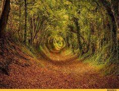 Природа,красивые фото природы: моря, озера, леса,дерево,деревья,длиннопост
