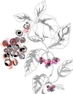 Flora - Masha Karpushina