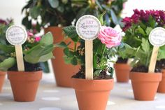 """""""let love grow"""" potted flower favors."""