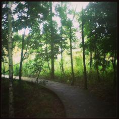 A wooden path through the trees. Mauritspark De Meern