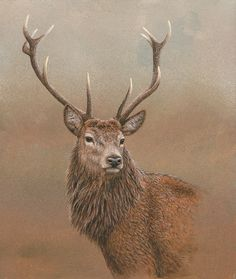 Red stag of Etive, a limited edition print by wildlife artist Robert E Fuller. Originally painted in acrylics the painting is one of a limited edition of 850