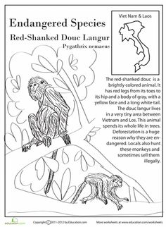 Worksheets: Endangered Species: Red-Shanked Douc Langur