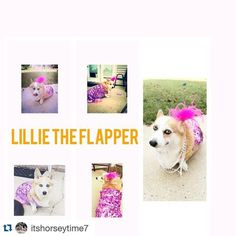 Lillie is so cute !! #Repost @itshorseytime7 .  @welsh_wear #welshwearcontest #costumecontest