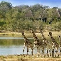 Wondering which lodges to stay in at the Greater Kruger National Park? We recommend five great lodges for your next safari in South Africa. Kruger National Park, National Parks, Chutes Victoria, Game Reserve South Africa, Sand Game, Grand Parc, Nature Sauvage, Game Lodge, Private Games