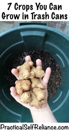 Hydroponics Gardening 7 Crops You Can Grow in Trash Cans ~ Urban Survival Gardening - Not everyone has space available for a huge garden, and it can be hard to Homestead Survival, Urban Survival, Survival Gear, Survival Skills, Survival Videos, Survival Shelter, Survival Quotes, Survival Prepping, Emergency Preparedness