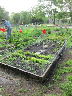 images about Community Garden Ideas on Pinterest