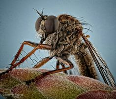 A robber fly rests on a bottlebrush flower in Boksburg, South Africa, in this National Geographic Photo of the Day from our Your Shot community. Hdr Photography, Landscape Photography, Excited Animals, Animal Species, Patterns In Nature, National Geographic Photos, Nature Photos, South Africa, Images