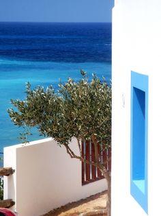 The olive tree and the sea Karpathos Island, Greece