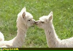 This is me and my husband, if your a llama than I'm a llama.