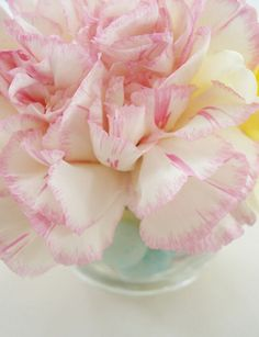 This photo of the Carnation flower has such a feminine quality to it.