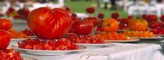 tomato Fest!
