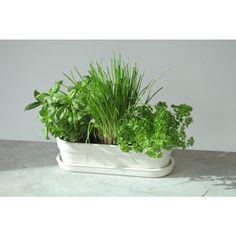Herbivore Indoor Planter