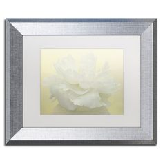 """Trademark Art Pure White Peony by Cora Niele Framed Photographic Print Size: 11"""" H x 14"""" W x 0.5"""" D, Frame Color: Brown"""