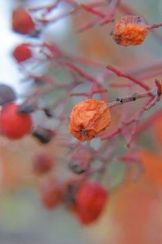 "Photo ""VintageBeauty"" by TJ-Victoria Vintage Beauty, Berries, Victoria, Inspirational, The Originals, Flowers, Plants, Art, Berry"
