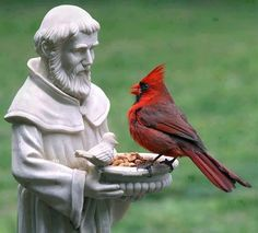 a cardinal with St Francis.  they look like they're conversing!
