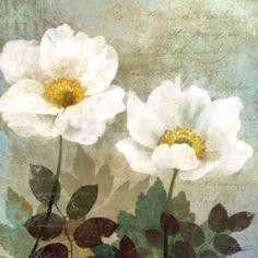 Anemone II Canvas Art - Keith Mallett (24 x 24)
