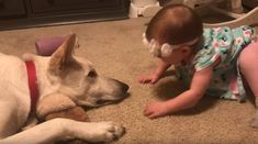 Baby girl invades family dogs personal space to kiss him prompting response dad couldn't foresee I Love Dogs, Puppy Love, Cute Dogs, Cute Babies, Animals And Pets, Funny Animals, Cute Animals, Baby Kiss, Family Dogs