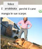 dog eats shoe